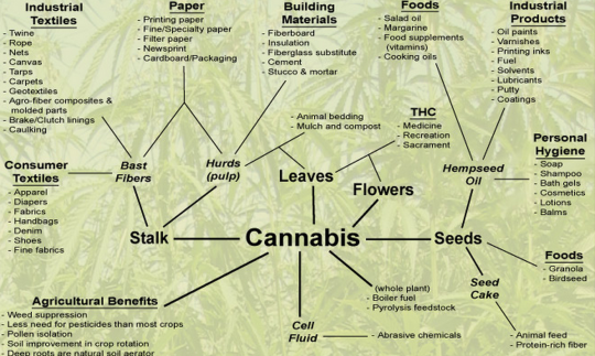 """amotivational syndrome and marijuana use an The first descriptions of cases of amotivational syndrome in marijuana users appeared in 1968 when two independent scientific articles appeared the author of one of them was david e smith and he was the first to use the term """"amotivational syndrome"""" in relation to the behavior of people who are heavy users of cannabis."""